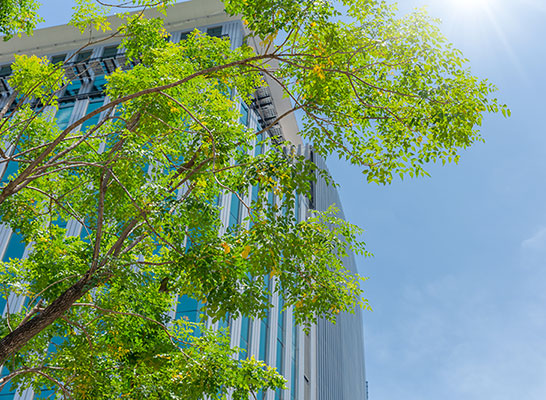 Tree in front of building - Energy Star®, LEED® EBOM & Building Benchmarking